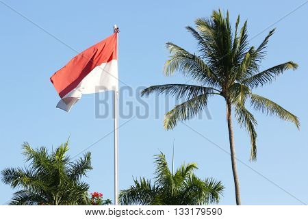 Outdoor shoot of Indonesian flag and palm trees