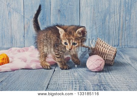 Grey kitten with pink wool ball and straw basket. Playful grey kitten. Sweet adorable kitten on a serenity blue wood background. Small cat. Funny kitten with copyspace
