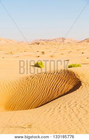 In Oman Old Desert  Rub Al Khali The