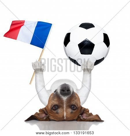 Soccer Football Dog With Ball