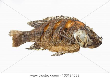 Tilapia Fish On White Paper