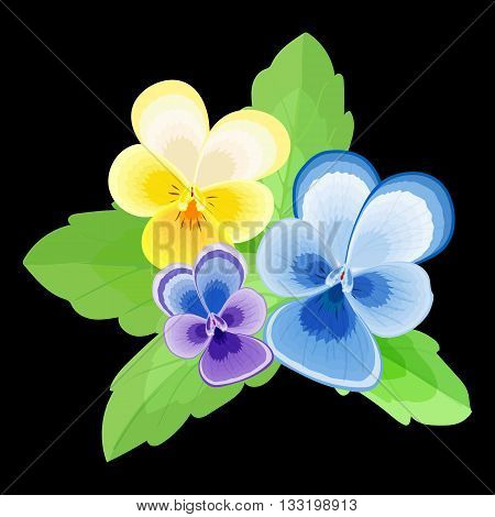 Pansy.Isolated stylized image of the flowers and leaves on a black background.Three flowers with petals of different colors.purpleyellowblue.