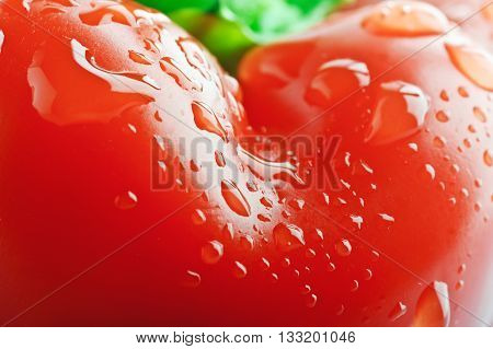 closeup isolated bell pepper paprika on the white background
