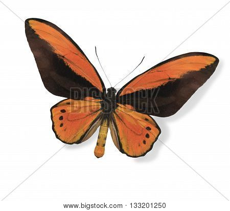 Orange butterfly isolated on white empty background