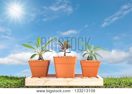Plants grown in pots small on the green grass for home and garden on beautiful sky background.