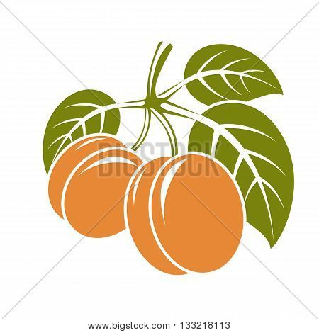 Harvesting symbol vector fruits isolated. Ripe organic sweet apricots with green leaves healthy food idea design icon.