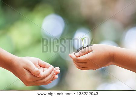 Child Hands Holding Soil With Sprout