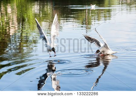 The Seagulls Flying Over The River In Summer Day