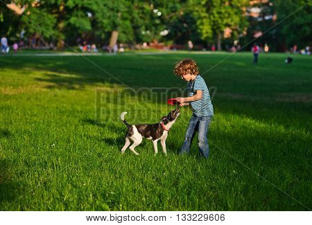 The boy of 8-9 years plays together with the doggy on a green grass in park. The little fellow holds red frisbee in hand. The black-and-white playful dog has mildly grinned.On a background big trees