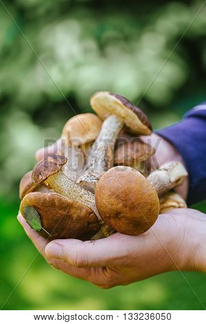 Forest mushrooms boletus in male hands vertical photo