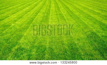 Bowling green cut grass lines background. Texture