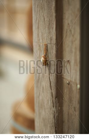 A large snail crawling up an old wooden pole on the side of a house shot with a shallow depth of field for subject isolation.