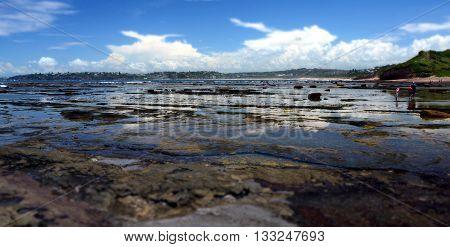 Low tide at Long Reef Headland, Sydney Australia