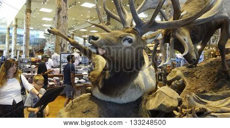 LAS VEGAS, NEVADA, MAY 27. Bass Pro Shops Outdoor World on May 27, 2016, in Las Vegas, Nevada. A battle between stuffed bull elk at Bass pro Shops Outdoor World in Las Vegas Nevada.