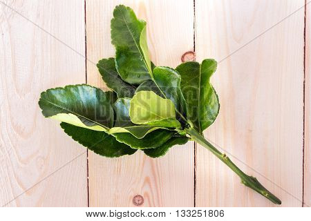 Kaffir lime leaves isolated on wooden background