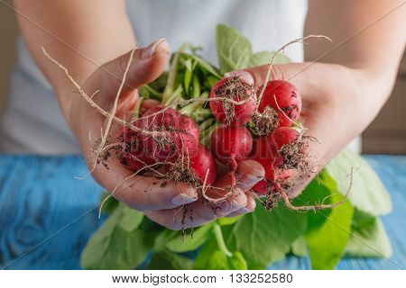 Bundle Of Bright Fresh Organic Radishes With Leaves On Blue Rustic Table