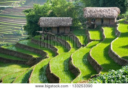 scenery, terraces, mountainous Sapa, Lao Cai, Vietnam