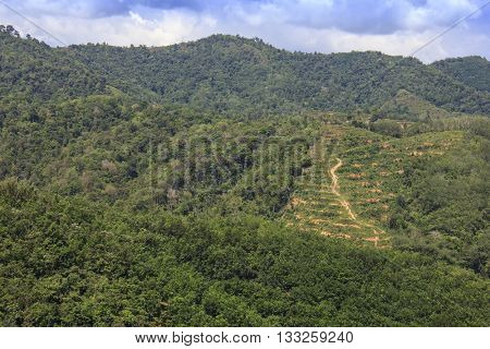 Deforestation environmental problem. Rainforest jungle in Borneo with patches cleared and planted with oil palms.