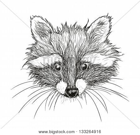 cute raccoon vector requests cuddle and snuggle