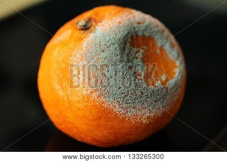 Mouldy tangerine/This is a mouldy tangerine on black plate.