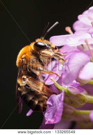 Bee Cling To Tiny Flower