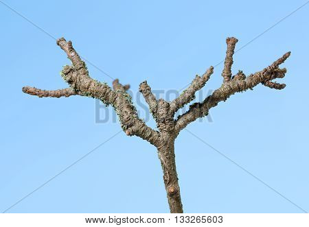 Withered Twig