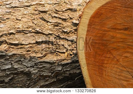 Brown wood surfaces Both the peel and the wood surface.