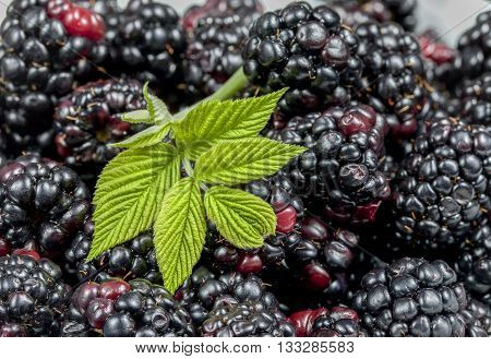 Leaves on blackberries. A close up image of a bunch of blackberries with a leaf.
