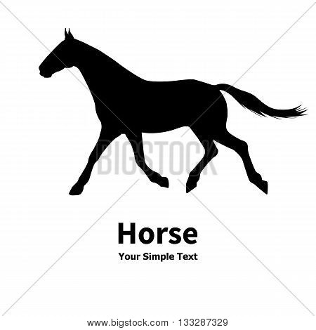 Vector illustration of a silhouette of a running horse pet. Isolated on white background. Horse side view profile.