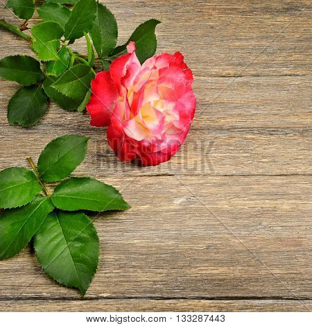 Red rose on wooden background. Top view.