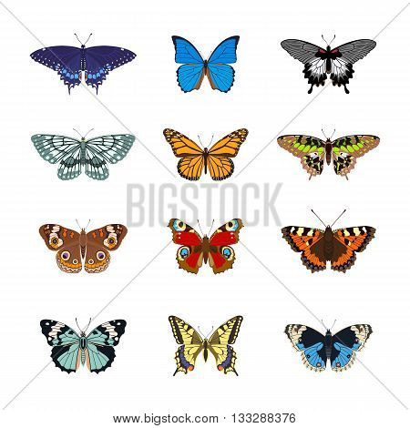 Set of realistc butterflies. Butterfly isolated on white background. Colorful butterfly. Vector illustration