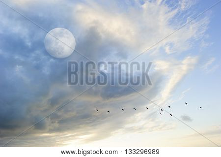 Moon clouds birds is a soft beautiful cloudscape over a blue sky with a silhouetted flock of birds flying by as a bright full moon rises in the evening sky.