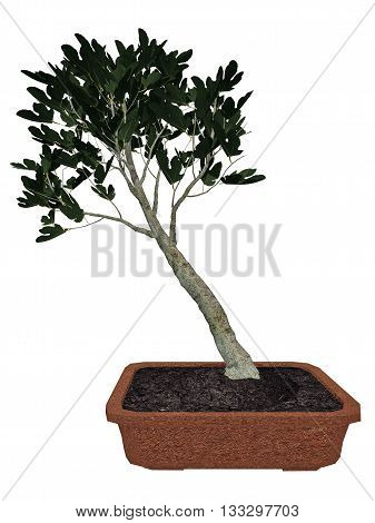 Fig, ficus carica, tree bonsai isolated in white background - 3D render
