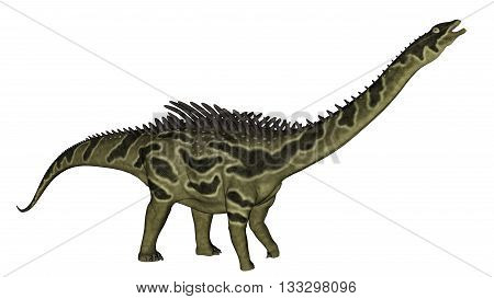 Agustinia dinosaur turning head up isolated in white background - 3D render