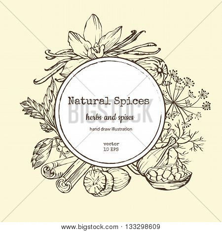 Vector card design with hand drawn spices and herbs. Decorative colorful background with vintage spice sketch.