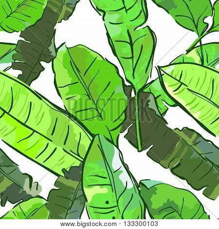 Vector Summer Seamless Pattern With Banana Palm Leaves. Tropical Leaves, Floral Background. Design F