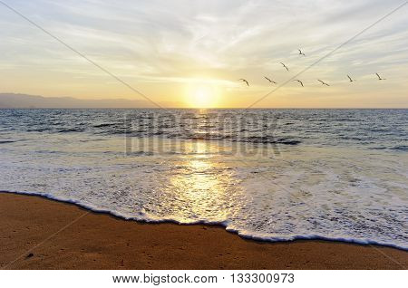 Ocean sunset birds a flock of birds flying toward the bright peaceful sun on the ocean horizon.