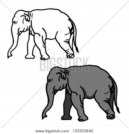 Graphic image of a large elephant. The picture of a gray elephant on a white background. The contour of the animal. Vector illustration of (set of two drawings)