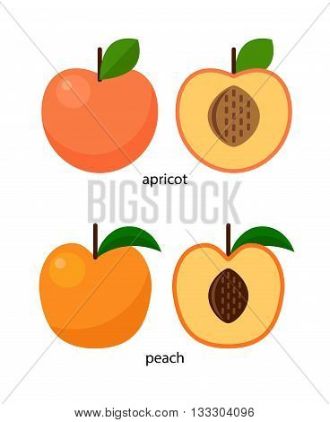Peach and apricot and their cross-sections with stone fruits