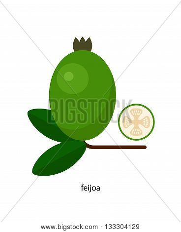 Nice Green feijoa fruit and its cross-section
