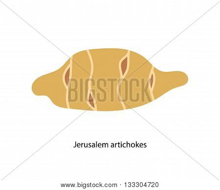 Root vegetable tuber of Jerusalem artichoke in brown