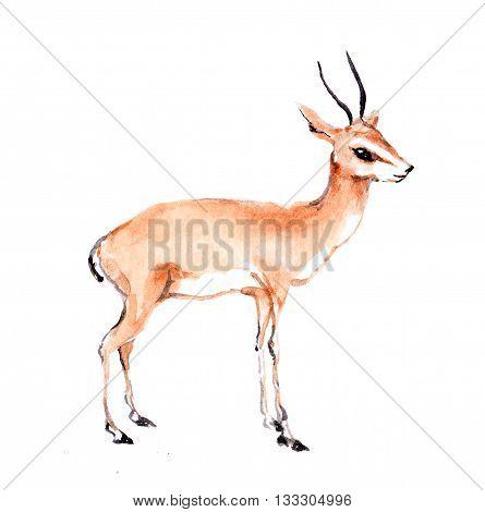 Antelope wild animal. Watercolor zoo painting - gazelle