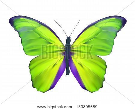 Green Butterfly Isolated on White Realistic Vector Illustration