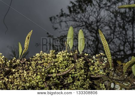 Moss, Lichen And Other Plants