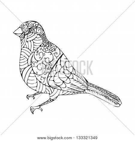 Illustration Of Bullfinch