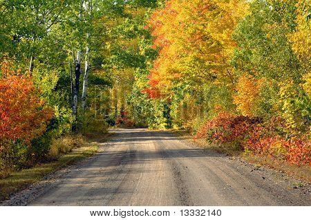 Brilliant Color In Upper Penninsula Michigan