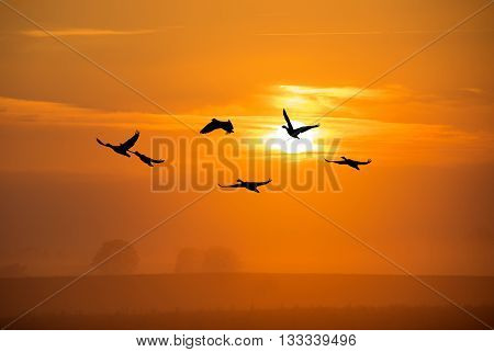 Landscape during bright sunset with flying birds