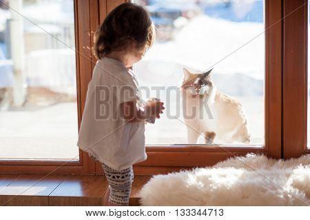 Best friends. The cat and the little girl, looking through a window