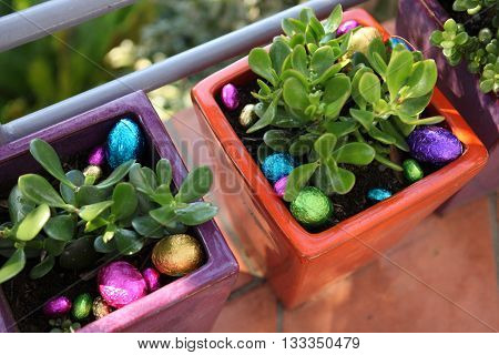Easter egg hunt. Colourful chocolate Easter eggs hidden around plants