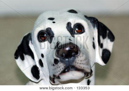 Dalmation Dog Closeup